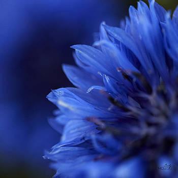 Blue Day II by Cindy Moleski