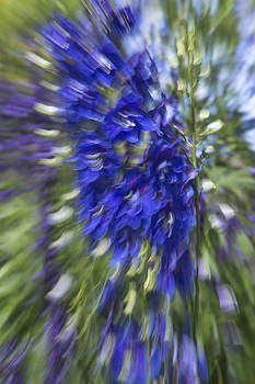 Minartesia - Blue Diffusion