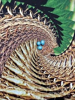 Blue Eggs by Deborah MacQuarrie-Selib