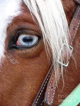 Blue Eye by Michele Bishop