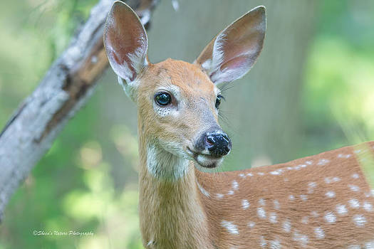 Blue-eyed Fawn by Sheen Watkins