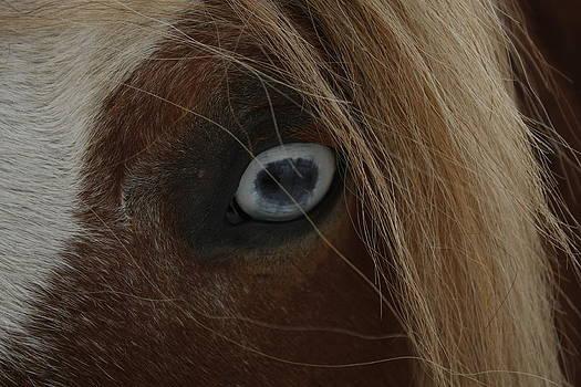 Blue Eyed Horse by David Yocum