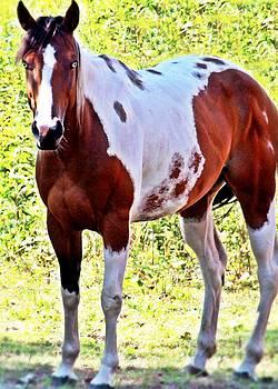 Blue-eyed Horse Pose by Sasha Wolfe