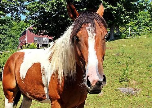 Blue-eyed Horse by Sasha Wolfe
