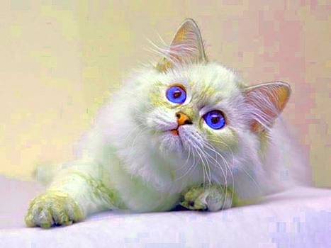 Blue Eyed Kitten by Kathy Budd