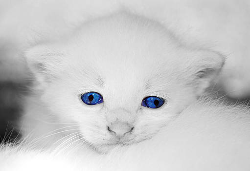 Blue Eyes by Annette Childress