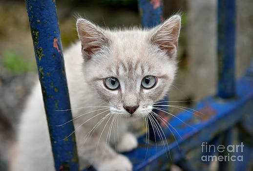 Blue eyes by Skyfish Images