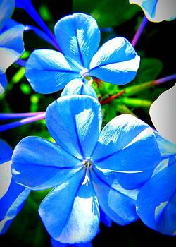 Blue Flower by David Mckinney