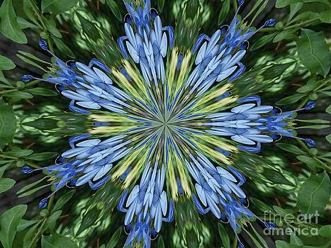 Blue Flower Star by Annette Allman