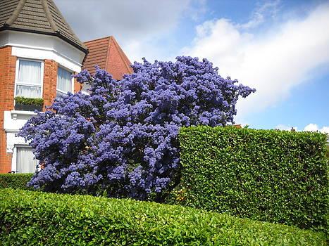 Blue Flowers Dense Tree by Basant Soni