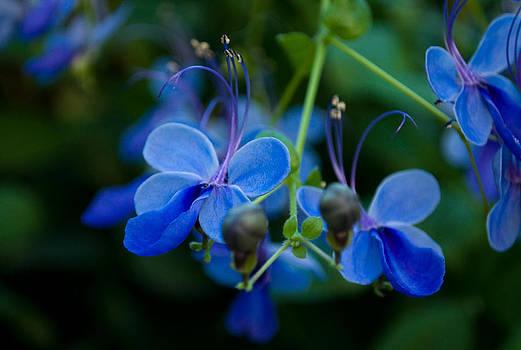 Iryna Soltyska - Blue flowers