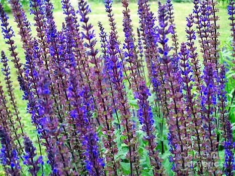 Blue Flowers by Jackie Bodnar