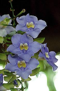 Blue Flowers by KimberAnne
