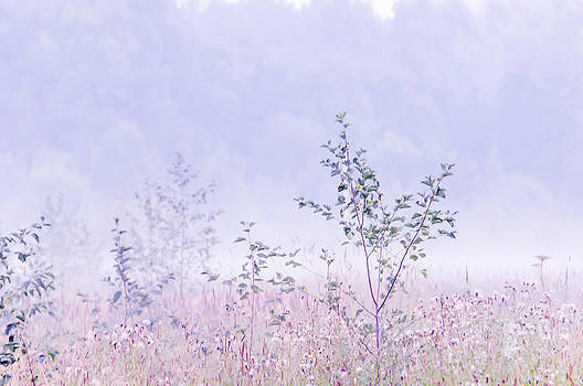 Jenny Rainbow - Blue Fog