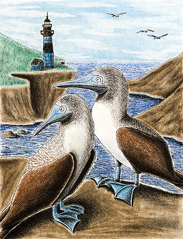Jeanette K - Blue-footed Booby