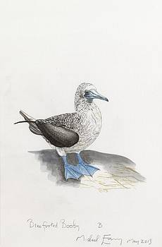 Michael Earney - Blue-Footed Booby