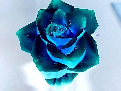 Blue Glowing Rose by Laura Lovell