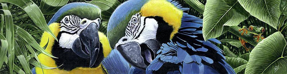 Blue-Gold Macaws by Durwood Coffey