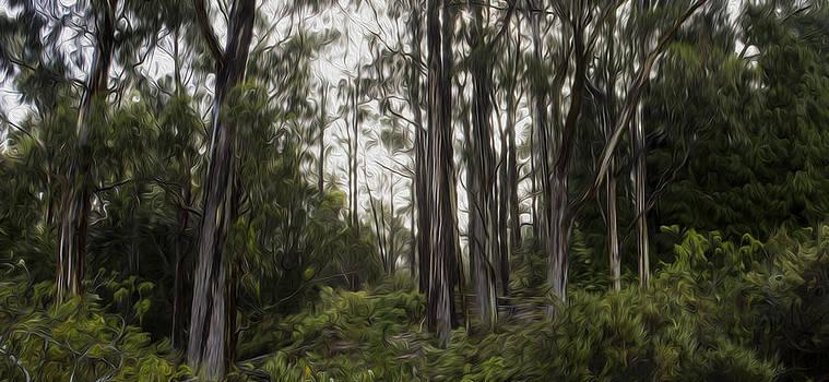 Blue Gum Eucalyptus Forest by Brad Scott