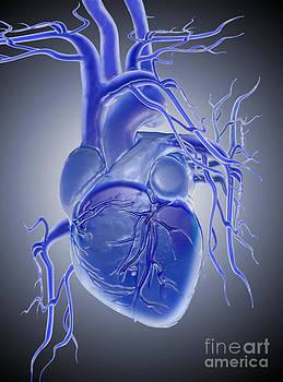 Mike Agliolo - Blue Heart