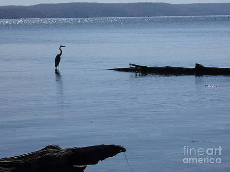 Blue Heron at a Distance by Stacy Frett
