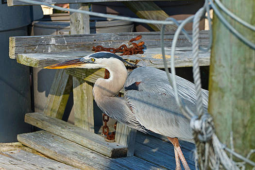 Carmen Del Valle - Blue Heron At The Bait Shop