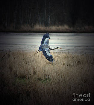 Blue Heron  by C E Dyer