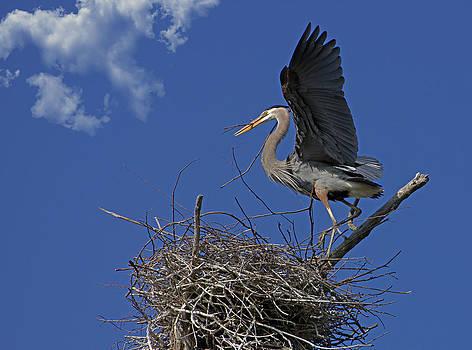 Torrey McNeal - Blue Heron Construction Site