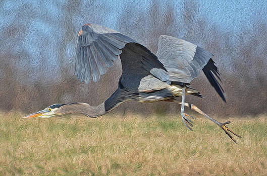 Blue Heron Flying by Laurie Winn Adams