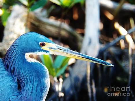 Judy Via-Wolff - Blue Heron