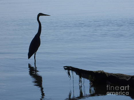 Blue Heron Reflection by Stacy Frett