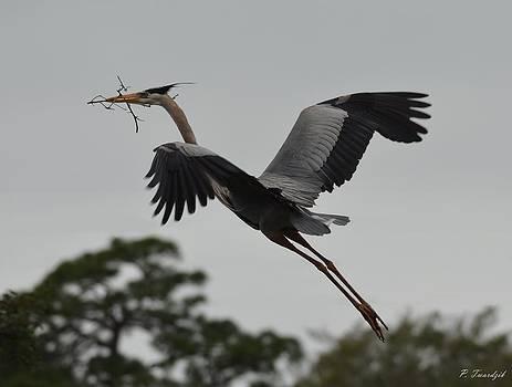 Patricia Twardzik - Blue Heron Takes to the Skies