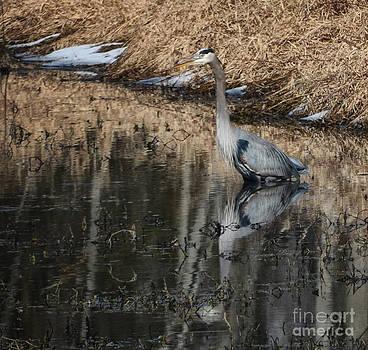 Blue Heron by Tamera James