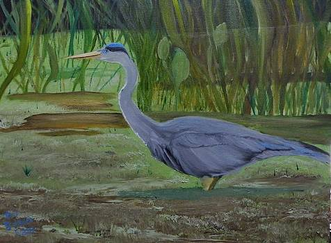 Blue Heron Wades in Swamp by Donald Schrier