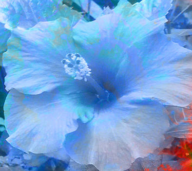 Blue Hibiscus by Louise Grant