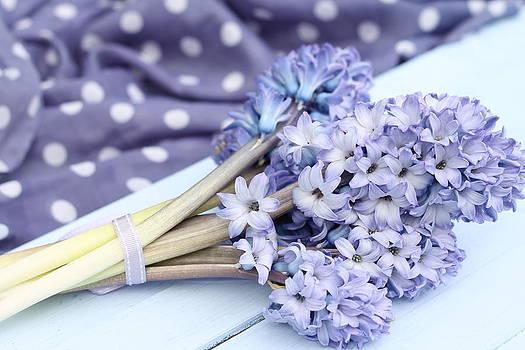 Blue Hyacinth  1  by Emma Manners