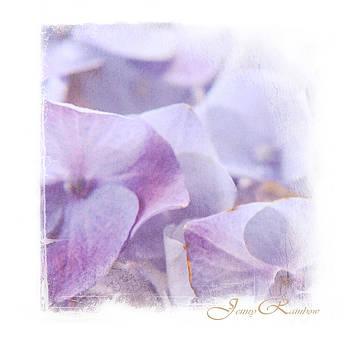 Jenny Rainbow - Blue Hydrangea. Mini-Square Idea for Interior