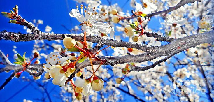 Ioanna Papanikolaou - blue in bloom