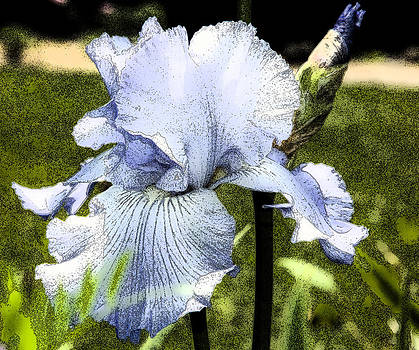 Blue Iris by Greg Reed