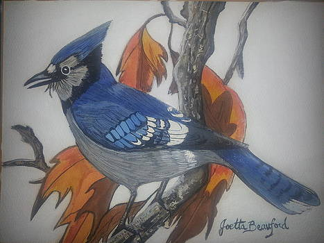 Blue Jay at Fall by Joetta Beauford