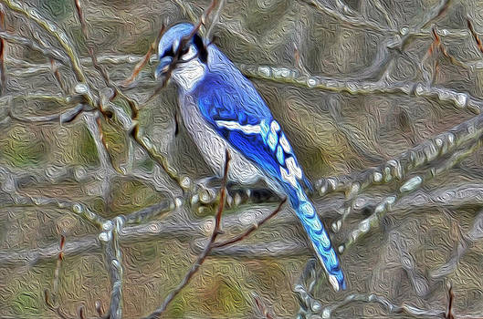 Blue Jay by Laurie Winn Adams