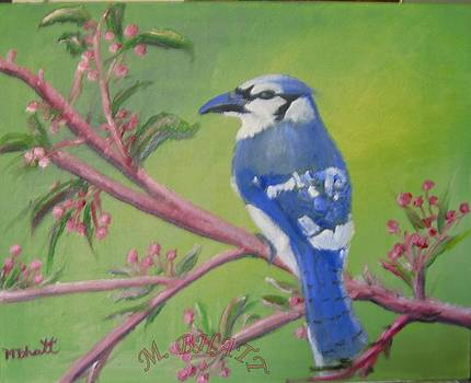 Blue Jay by M Bhatt