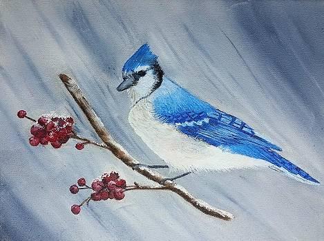 Blue jay by Valorie Cross