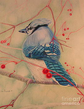 Blue Jay with Red by Lisa Prusinski