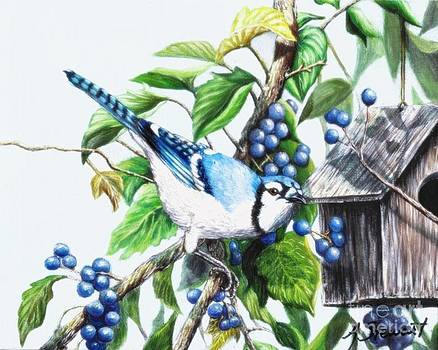 Blue Jays and Blue Berries #1 by Amanda Hukill