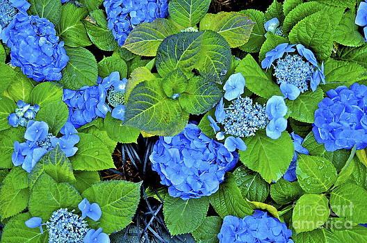 Blue by Kimberly Nickoson