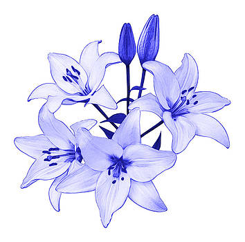 Jane McIlroy - Blue Lily