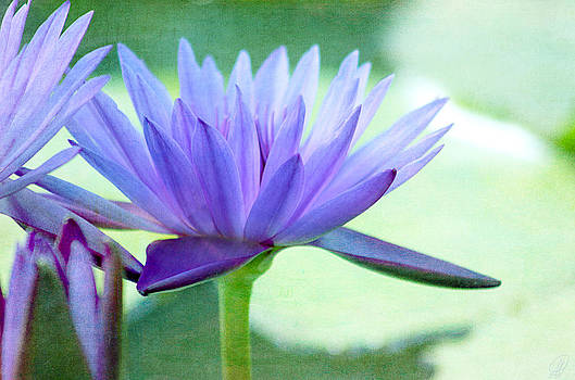 Blue Lily by Margaret Hormann Bfa