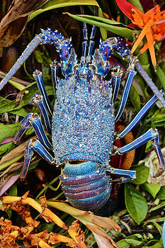 Venetia Featherstone-Witty - Blue Lobster