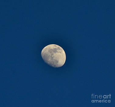 Blue Moon by Derry Murphy
